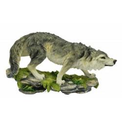 Loup gris aux aguets
